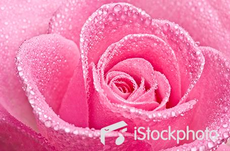 Bán hình ảnh account giá rẻ nhất từ istockphoto
