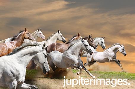 Bán hình ảnh chất lượng cao Jupiterimages